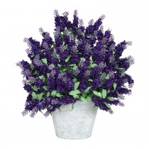 lavender iron potted