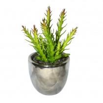 4.72'' H Green PE Succulent Plant