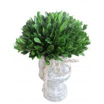 """12"""" Holly & Boxwood Topiary"""