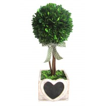 "16.5""H Boxwood topiary with heart wood box"