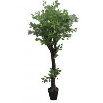 """63"""" Chinese Next Tree"""