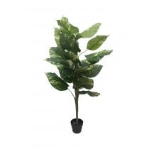 """55"""" Everygreen Bonsai"""