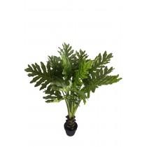 "47"" Tropical Shell Leaf Tree"