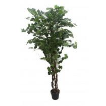 "70"" Ginkgo Tree"