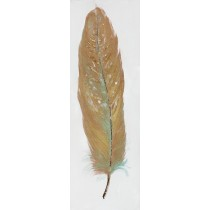 Feather Collection-IIII Oil Painting Wall Decor