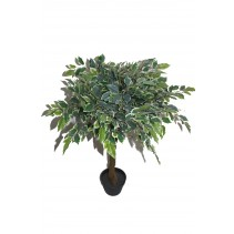 "36"" White Banyan Tree"